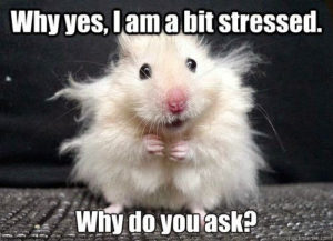 HAMSTER WITH CRAZY HAIR