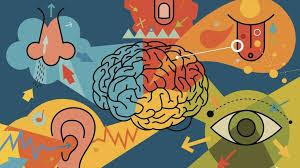Brain, ear, eyes, finger, nose